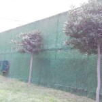 dekoratif çim çit